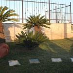cicas giardinaggio